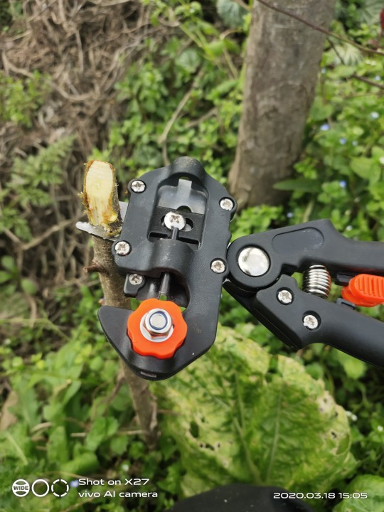 Professional Grafting Tool in Garden