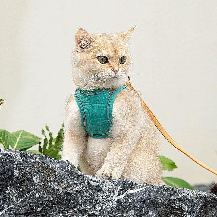 Cat Harness Leash Set
